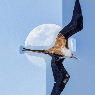Frigate moon